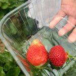 Dorset Abilities social & horticulture
